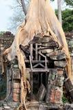 Banyanwortels in Angkor-stenen Stock Foto