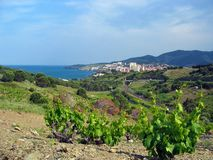 Banyuls village vineyard Stock Photo