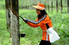 Banyuwangi Stock Photography