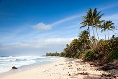 Banzai Pipeline Beach Landscape Hawaii Royaltyfri Fotografi