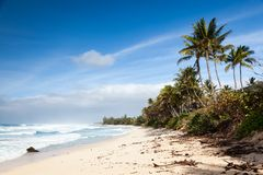 Banzai Pipeline Beach Landscape Hawaii. Debris covered coastal, beach landscape on a sunny day with blue sky at Banzai Pipeline, north shore, Oahu, Hawaii, USA Royalty Free Stock Photography