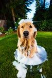 Baño del perro Imagen de archivo
