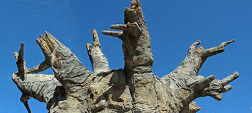 Baoba Baum stockbild
