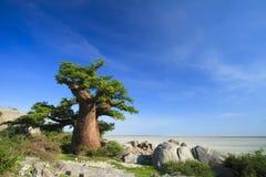 Baoba drzewo Fotografia Stock