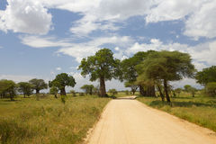 baobabów drzewa zdjęcia royalty free
