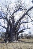 Baobab, Afryka Fotografia Stock