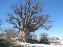 Baobab de Baines Imagens de Stock Royalty Free