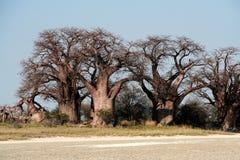 Baobab di Baines Fotografie Stock Libere da Diritti