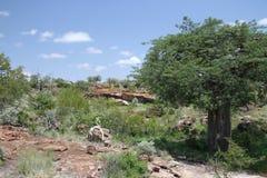 Baobab, digitata do Adansonia no parque nacional de Mapungubwe, Limpopo Fotos de Stock Royalty Free