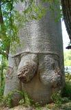 Baobab en Morondava, Madagascar foto de archivo libre de regalías