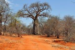 Baobab et saleté rouge en Afrique photos libres de droits