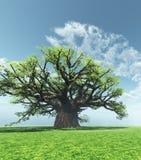 Baobab impressionnant Photos stock