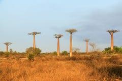 Baobab landscape Madagascar Royalty Free Stock Photos
