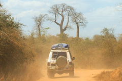 Baobab off road Stock Photos