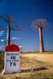 Baobab road Royalty Free Stock Photos