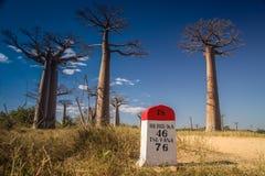 Baobab road Stock Image