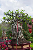 Baobab Royalty Free Stock Photos