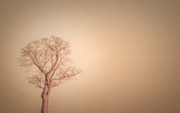Baobab at sunrise Royalty Free Stock Photography