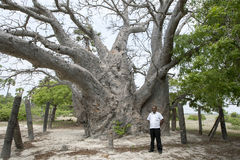 A baobab tree believed to be around 500 years old on Delft Island in the Jaffna region of northern Sri Lanka. Stock Photography