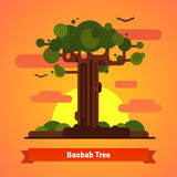Baobab tree evening sunset scene Stock Photo