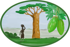 Baobab Tree and Fruit Watercolor Royalty Free Stock Photos