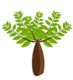 Baobab tree illustration Stock Images
