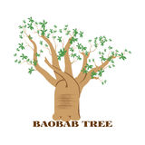 Baobab tree. Isolated on white background.Preserve nature concept Royalty Free Stock Photography