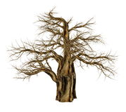 Baobab tree without leaves, adansonia digitata - 3D render. Baobab tree without leaves, adansonia digitata, isolated in white background - 3D render Stock Images