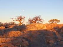 Baobab tree in the Makgadikgadi Pan Royalty Free Stock Photos