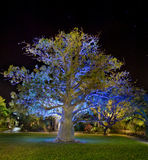 Baobab tree by night. Artificially illuminated Stock Images