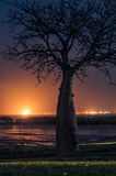 Baobab Tree. By night in Broome Stock Photo