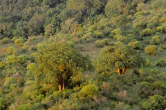 Baobab tree tanzania Stock Photo
