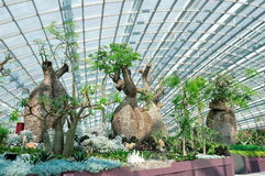 Baobab trees in Gardens by the Bay Singapore Stock Photo