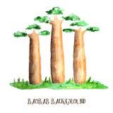 Baobab trees Royalty Free Stock Images