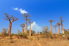 Baobab view Royalty Free Stock Images