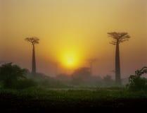 Baobabaveny - Morondava - Madagascar Fotografering för Bildbyråer