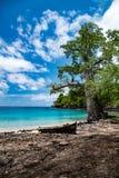 Baobabbaum durch Sao- Tomeinselblaulagune stockfotografie