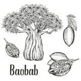 Baobabbaum, Frucht, Blatt, Nussstich-Weinlesesatz Hand gezeichnete Skizzenvektorillustration Schwarzes auf weißem Hintergrund Stockfoto