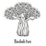 Baobabbaum, Skizzen-Vektorillustration der Blattstichweinlese Hand gezeichnete Schwarzes auf weißem Hintergrund Stockfotografie