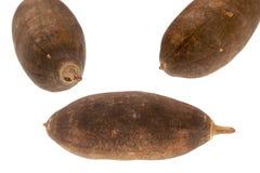 Baobabfrukt Arkivbilder