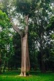 Baobabgränd, Madagascar arkivbild