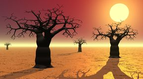 Baobabs door zonsondergang Stock Afbeeldingen