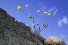 Baobabs with flower Stock Images