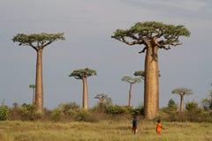 Baobabs im Busch lizenzfreie stockfotos