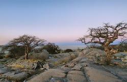 Baobabs na ilha de Kubu no inverno fotos de stock royalty free