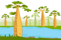 Baobabs near the river. Beautiful Baobab tree silhouettes. vector illustration