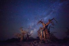 Baobabs onder de melkachtige manier stock afbeeldingen