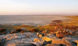 Baobabs op Kubu-eiland in de winter royalty-vrije stock foto