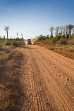 Baobabs road Stock Images