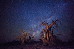 Baobabs under the milky way Stock Images